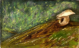 Toadstools & Fireflies,  Watercolour and Soft Pastel, 15.5 x 9, Copyright Wendie Donabie 2012