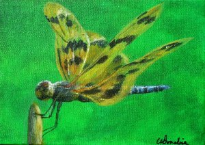 2014-19 Dragonfly #2, Acrylic on Canvas, 5 x 7 inches, Copyright Wendie Donabie 2014