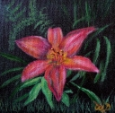 Day Lily #1, Acrylic on Canvas, 6 x 6 inches, Copyright Wendie Donabie