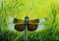 Dragonfly #6, Acrylic on Canvas, 5 x 7 inches, Copyright Wendie Donabie