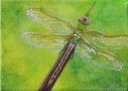 Dragonfly #7, Acrylic on Canvas, 5 x 7 inches, Copyright Wendie Donabie