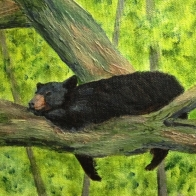 3720 Perfect Place for a Nap, Acrylic on Canvas, 6 x 6 inches, Copyright Wendie Donabie
